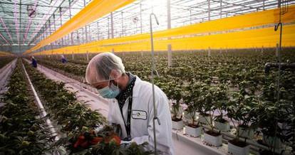 ENLACE apela a los grupos parlamentarios a que atiendan a la realidad social e inicien el debate sobre la regulación integral del cannabis
